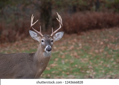 A white-tailed deer right-point buck runs along the edge of the woods in Missouri near the Mississippi River