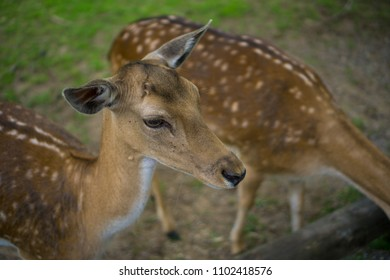 A white-tailed deers fawns standing in a meadow, Bambi concept, wild nature, shallow depth of field.
