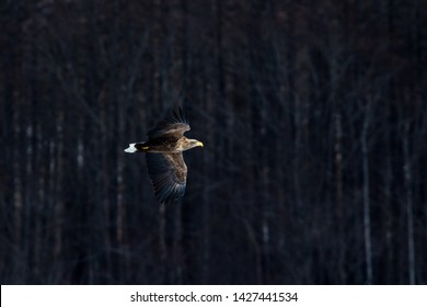 Imágenes Fotos De Stock Y Vectores Sobre Eaglewallpaper