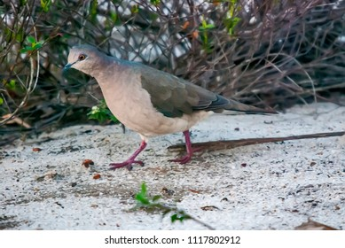 Dove Made Out Water Images, Stock Photos & Vectors