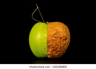 A whole apple stitched with a needle with white threads and composed of two parts, fresh green and shriveled, old yellow on a black background close-up.