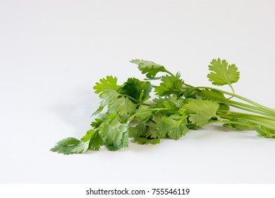 Whole coriander with leaves and root  on white background.  This aromatic herb is essential ingredient in Thai food.