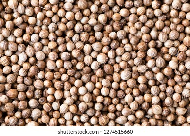Whole coriander seeds texture or background