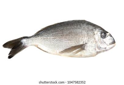 whole dorado fish on a white background