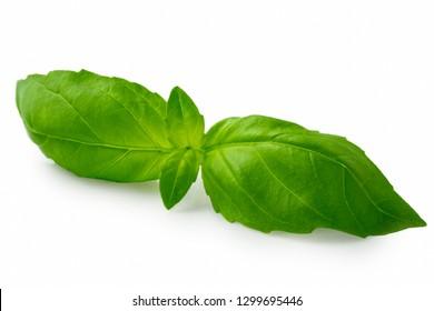 Whole fresh basil leaves isolated on white.