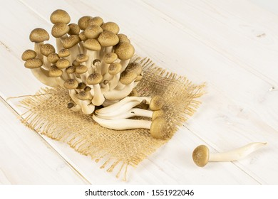 Lot of whole fresh brown buna shimeji mushroom on natural sackcloth on white wood