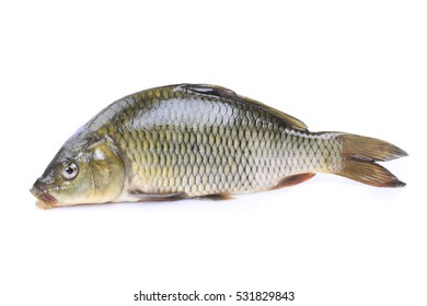 whole fresh fish isolated on white background. clipping path