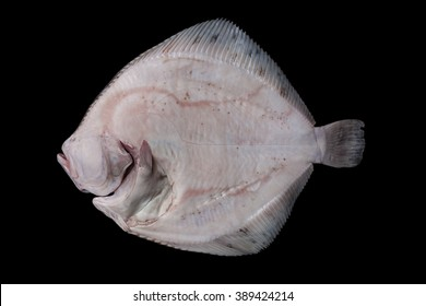 Whole fresh raw disemboweled flatfish bottom side, caught in the Alboran Sea in Spain, isolated on black background.