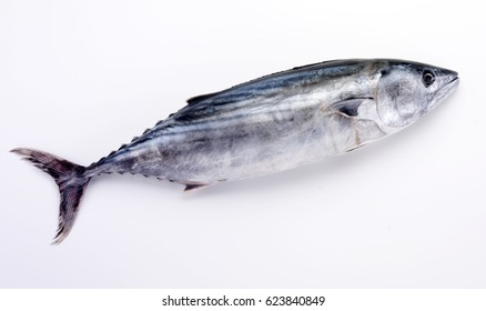 WHOLE FRESH UNCOOKED SKIPJACK TUNA ON WHITE