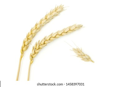 Lot of whole golden bread wheat ear copyspace below flatlay isolated on white background