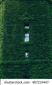 Whole home facade covered in green ivy. The building is completely wrapped up in ivy