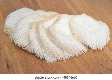 Whole lion's mane / bearded tooth / pom pom / hedgehog mushroom