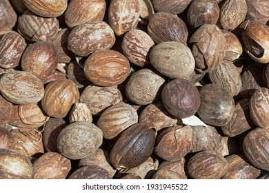 Whole nutmeg fruits as background or texture.
