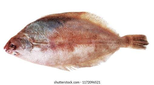 Whole Plaice flatfish isolated on a white  background. Top side view.