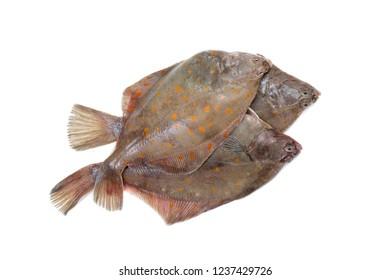 Whole Plaice flatfish isolated on white