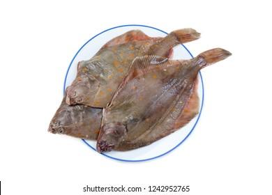 Whole Plaice flatfish isolated on a white background.