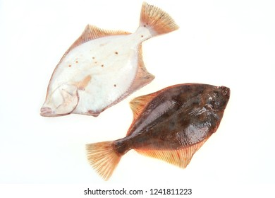 Whole plaice flatfish on a white background