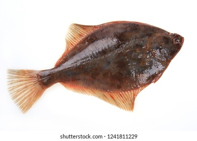 Whole plaice flatfish on a white background