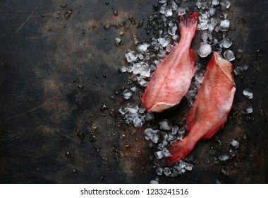Whole raw organic fish sea perch on ice cubes on a dark blue slate or stone background.Top view with copy space.