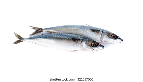 whole round blue mackerel on white background