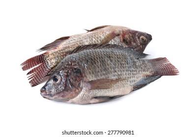 whole round fresh Tilapia fish on white background