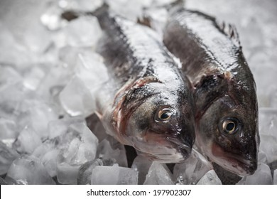 Whole Sea bass on ice