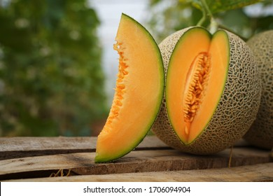 Whole and sliced of Japanese melons,honey melon or cantaloupe (Cucumis melo) on wooden box with plant growing greenhouse  background.Favorite fruit in summer.Food,Fruits or healthcare concept.