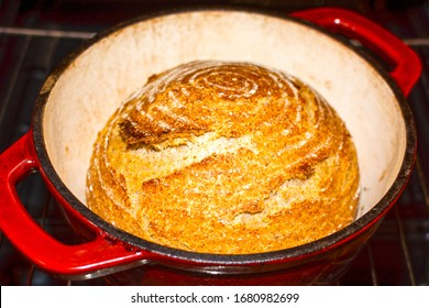 Whole wheat bread loaf baked in dutch oven iron cast pot fresh from the oven, pure levain recipe