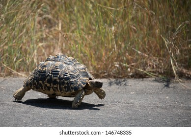 Why did the Tortoise Cross the Road