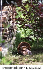 Wicker basket with firewood, firewood, picnic. Rustic style, summer background screensavers.