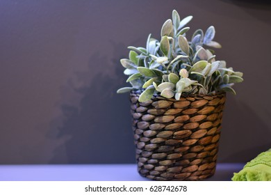 Wicker basket. Flower in a wicker basket. Wicker pot with plant