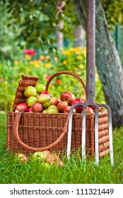 Wicker basket of fruit in garden
