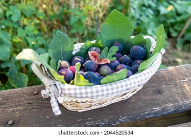 A wicker basket full of freshly picked purple figs on a wooden table. The cutted fig in the center invites the viewer to taste it. Countryside life concept.