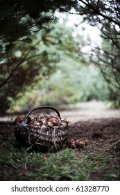 Wicker basket full of various kinds of mushrooms in a forest