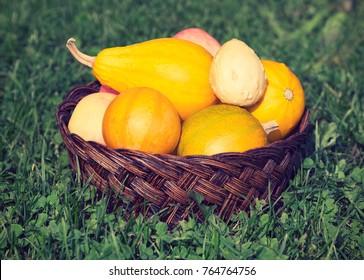 Wicker basket with ornamental gourds, apples in grass. Instagram effect