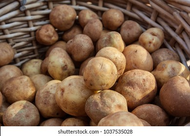 Wicker basket of potatoes sits on sale at local farmers market.