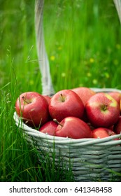 wicker basket with red apples outdoor