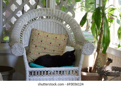 A Wicker Chair and Pillow, Featuring a Napping Black Cat, on a Cozy Porch, Conveying the Concept of Relaxation and Retreat, Interior, Afternoon Sunlight, Close Up, Eye Level.