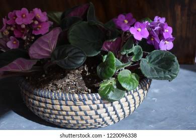 Wicker flowerpot with flowers