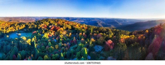 Wide aerial panorama of autumnal leave trees in Mount Wilson town of Blue Mountains, Australia. Clear blue sky and bright beams of rising sun over canopy of trees in gardens.