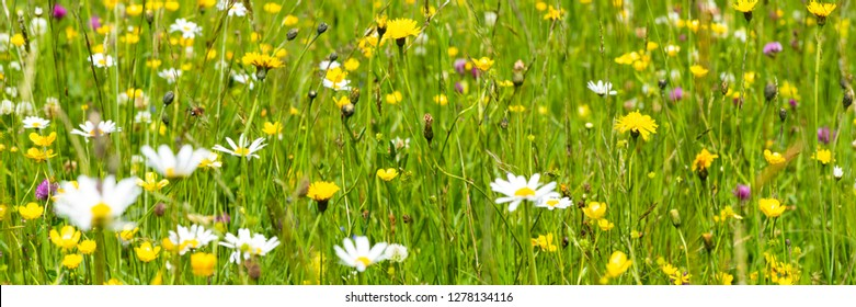 wide angle banner with blooming flowers on meadow