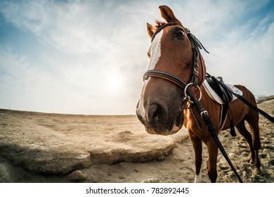 Wide angle close up of brown horse in desert against blue cloudy sky with negative space