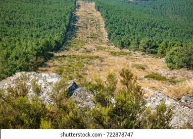 Wide angle of huge firebreak and pine tree forest in the mountain