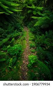 Wide Angle Photograph of Tree Ferns in Tarra Bulga National Park, Balook, Victoria, Australia