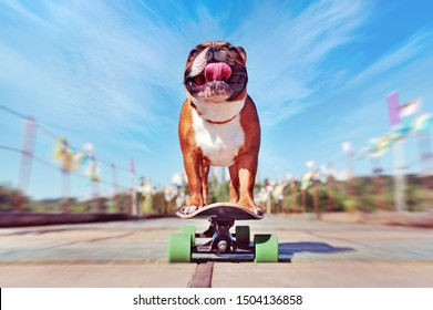 Wide angle picture of a dog skateboarder