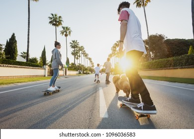 wide angle picture of the family with the dog from the back riding on skateboards on a street with palm trees on a sunset