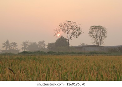 Wide angle of the rice field in the morning sunshine.