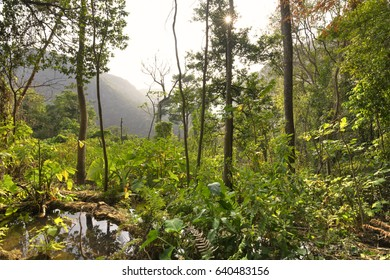 Wide angle scenic landscape of hills and dense jungle vegetation under hazy afternoon sun in Chiapas, Mexico