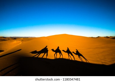 Wide angle shot of people riding camels in caravan over the sand dunes in Sahara desert with camel shadows on a sand