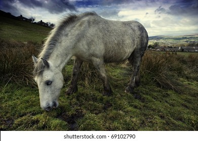 Wide angle shot of a white horse grazing in a field.